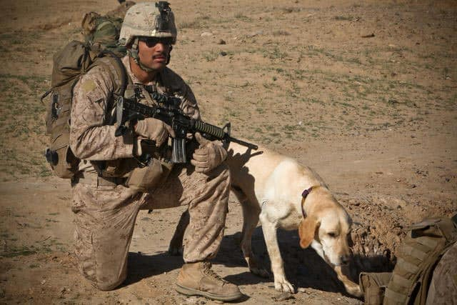 Soldier On Patrol With Dog