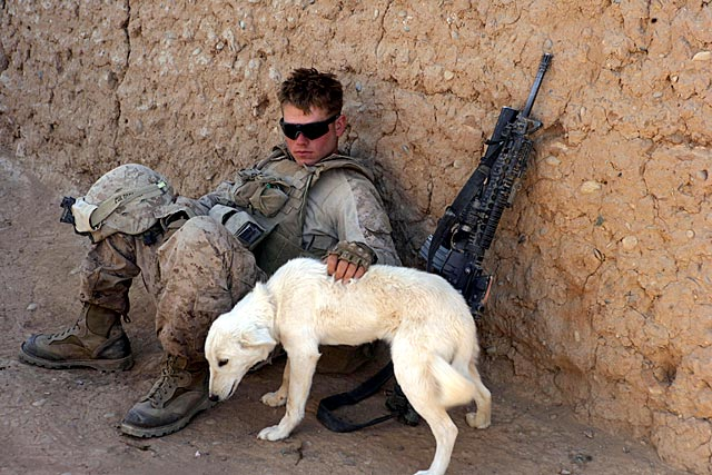 Soldier Pets Dog