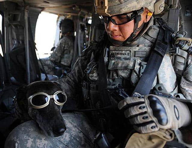 Soldier With Dog In Helo