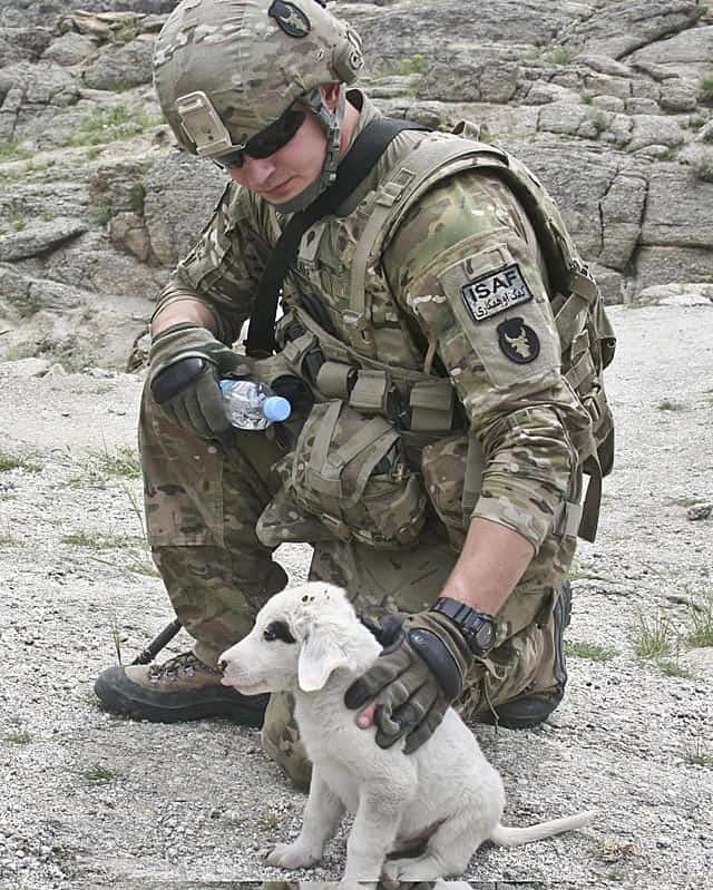 Soldier With Pup