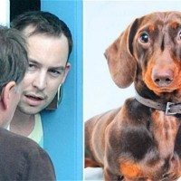 Mini Dachshund At Center Of Bitter UK Custody Battle