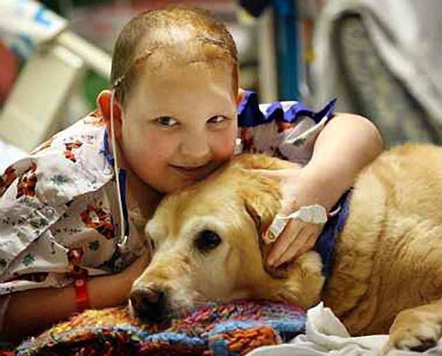 Ohio Children's Hospital Patients Cherish Therapy Dog Kayla