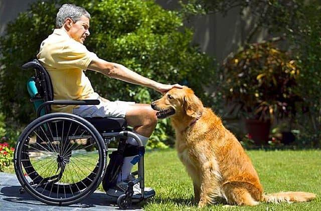 Texas Dog Earns Award For Saving Owner's Life