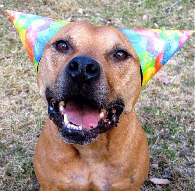 Ohio City Council Amends Vicious Dog Ordinance, A Win For The Pitties!