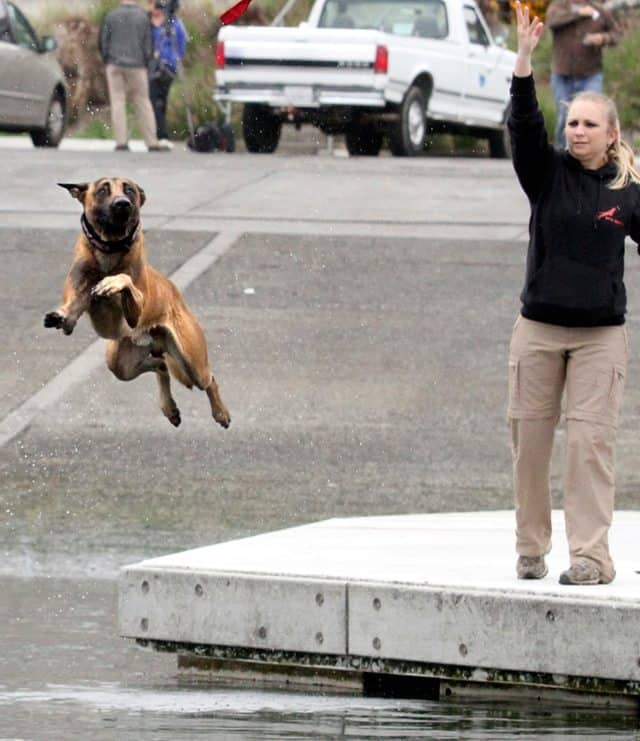 Record-Breaking California Canine Jumps Over 31 Feet