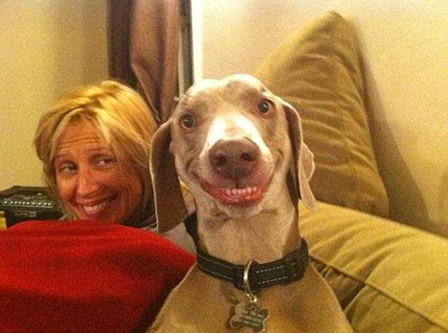 Smiling Dog Goes Viral On Facebook & Twitter