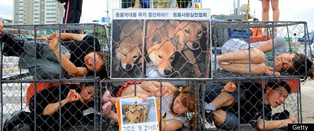 Dog Meat Festival In South Korea Cancelled After Animal Rights Protests