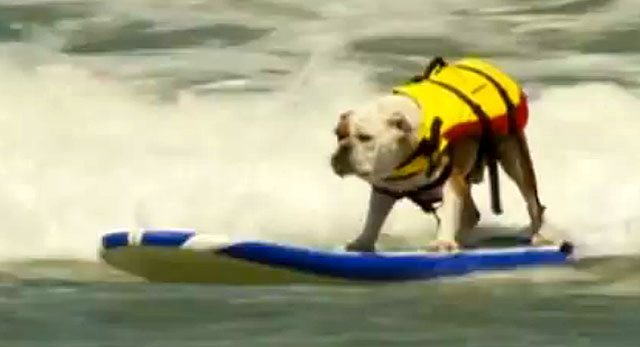 Surfing Dogs Hit The Beach For California Competition