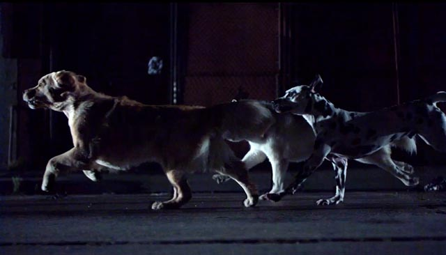 Dogs As Superheroes? Awesome Video!