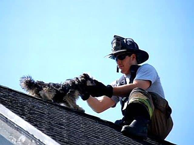 Long Island Firefighters Rescue Dog Trapped On Roof