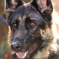 WTC SAR Dog Morgan Passes Away