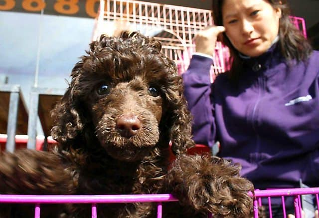 Chinese City's Dog Culling Plan Is Dropped