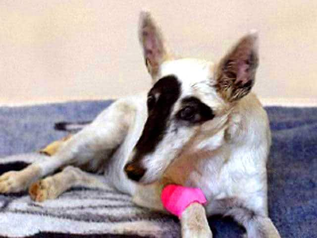 Colorado Dog Thrown From Car Is Rescued