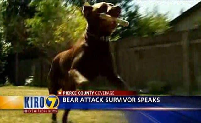 Dog Was 'Culprit And Savior' In Washington Bear Attack