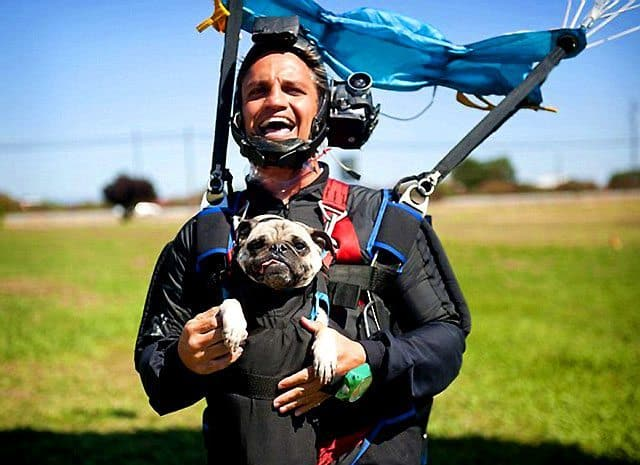 California Dog Loves Parachute Jumping With Owner