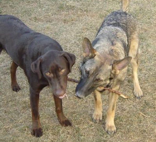 Colorado Dogs Autopsied For Poisoning