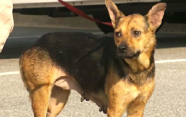 Stowaway Dog Survives Hot Journey From South Carolina to Georgia