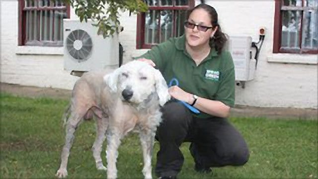 'Worst Case' Of  Dog Neglect Ever Seen At UK Animal Shelter