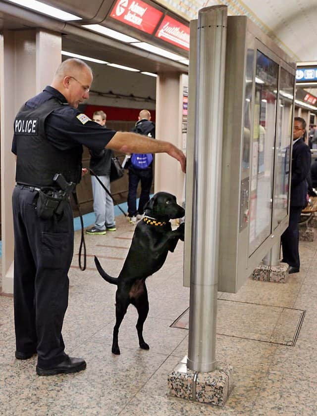 Bomb-Sniffing Canines Named After 9/11 Victims