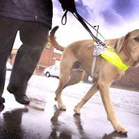 Dog Attacks On Guide Dogs Doubles In UK