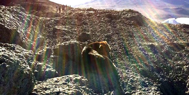 Rare Sight As Dog Is Spotted On Top Of Mount Kilimanjaro