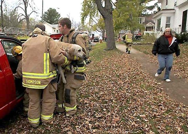 wisconsin firefighters save dog 04
