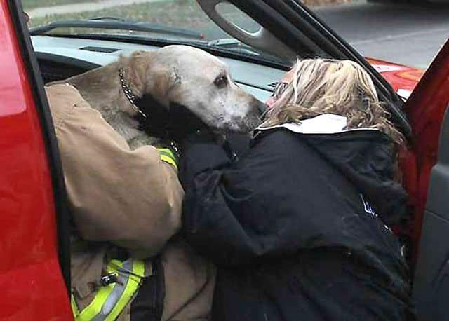 wisconsin firefighters save dog 05