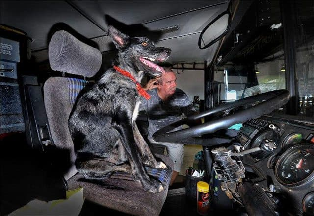 Dog Takes Double-Decker Bus For A Spin
