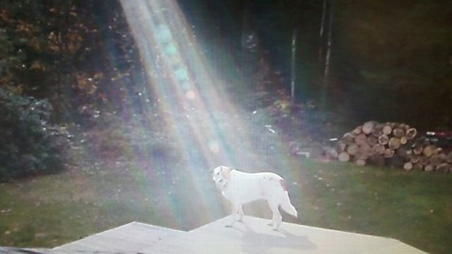 Sunbeam Shines on Fallen Soldier's Miracle Dog