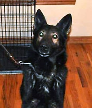 Oklahoma Police Dog Dies In Possible Kidnapping