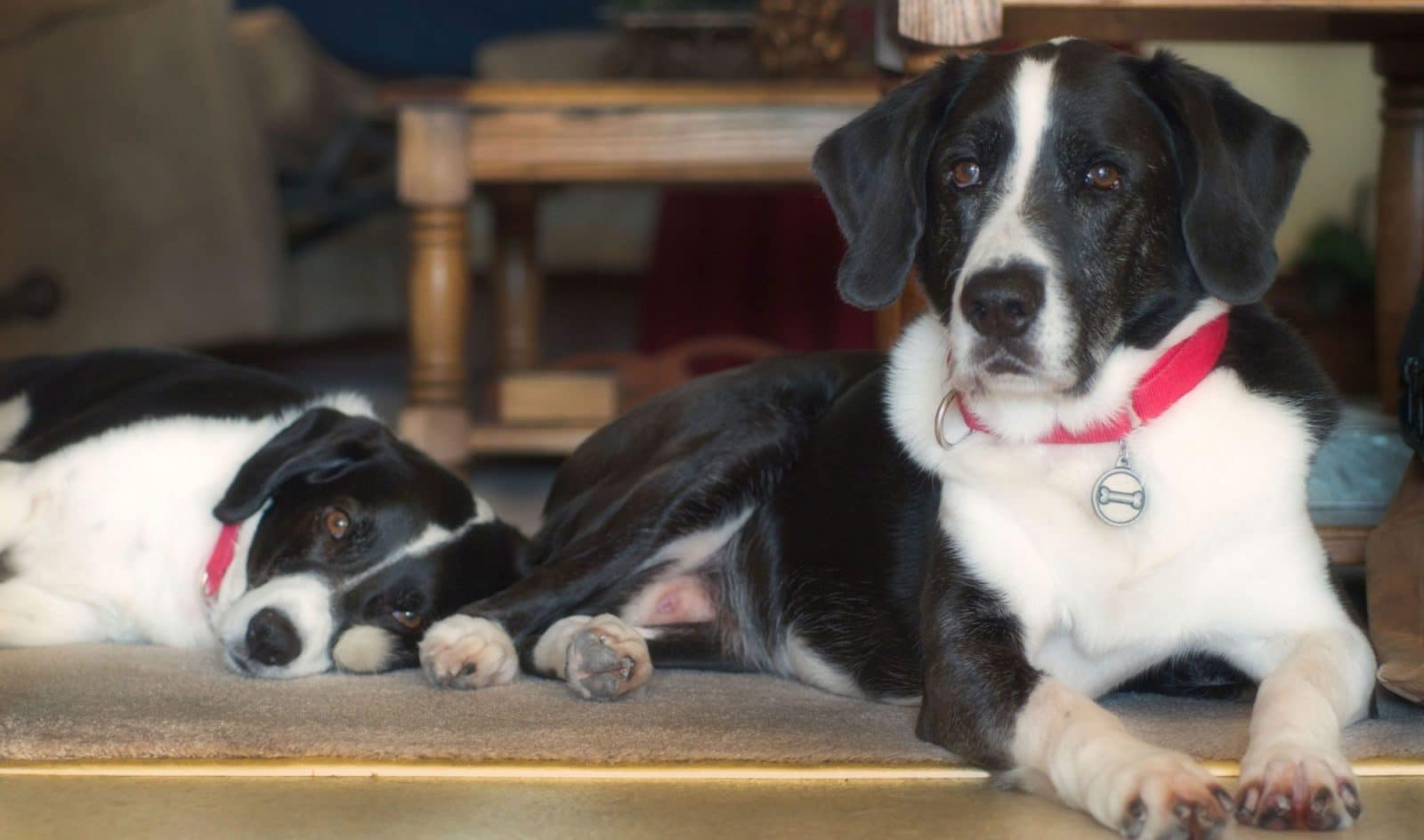Most Popular Dog Names Of 2011