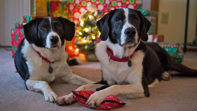 Max & Remy wish everyone a Merry Christmas!