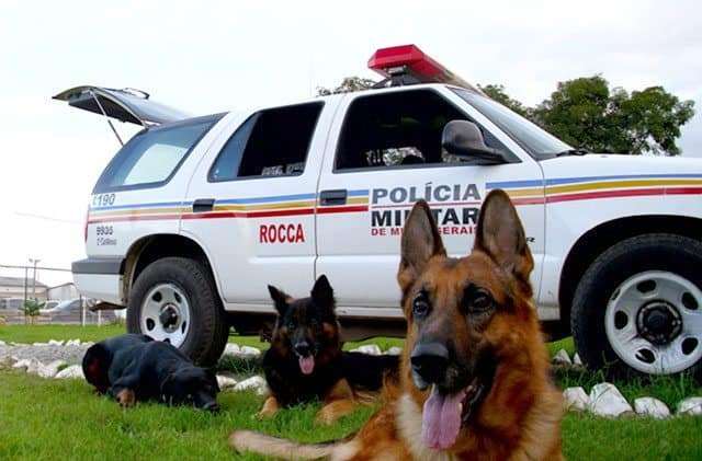 Tribute Paid To Brazilian Police Dogs Killed In Action