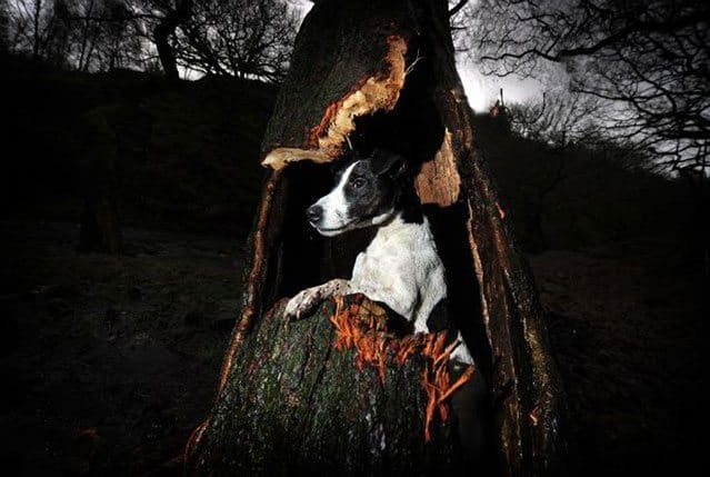 Jack Russell Rescued By Firefighters After Getting Stuck Up Tree