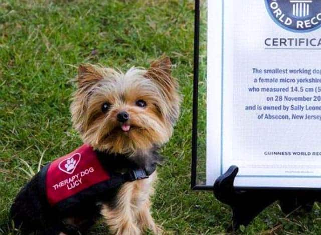 Tiny New Jersey Therapy Dog Wins Big World Record