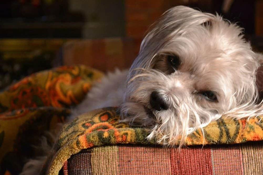 Stunning Dog Photography #45 Dog Files Community #9