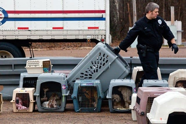 Women Arrested After Over 140 Dogs Found In U-Haul Truck