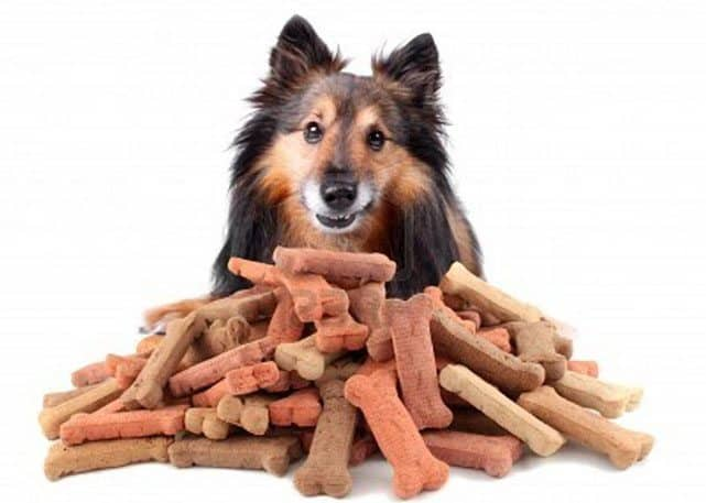 FDA Warns Against Dog Treats From China