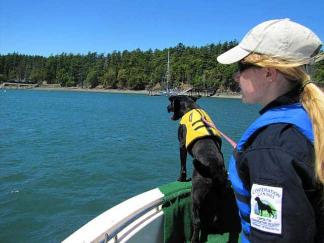 Whale Poop Sniffing Dog Is Saving Killer Whales