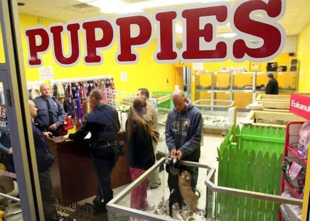 Brick, New Jersey Mayor Proposes Outlawing Puppy Mills