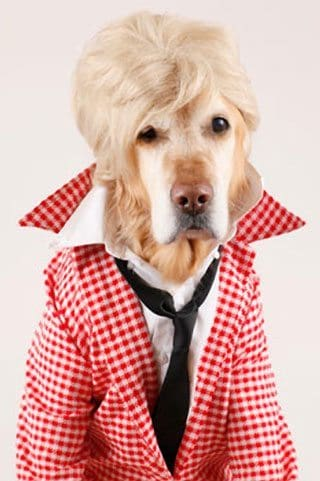 Dog In Ellen DeGeneres Garb Booted From Billboard