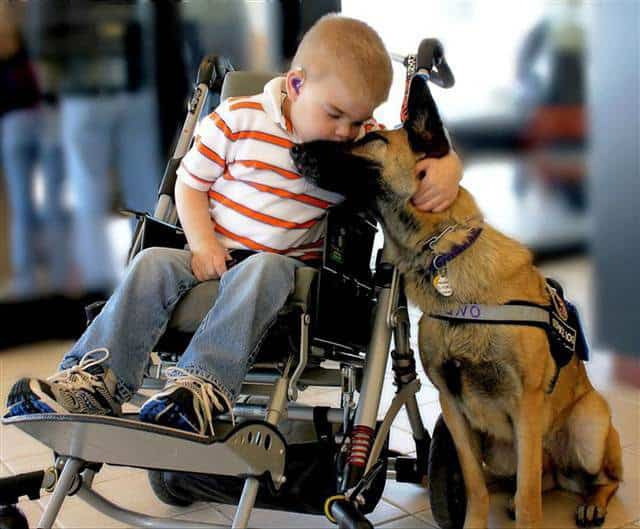 Lucas and Juno: The Bond Between A Rescue Dog And A Dying Boy