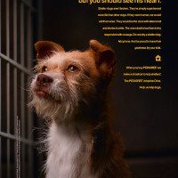 Pedigree-Adoption-Ad