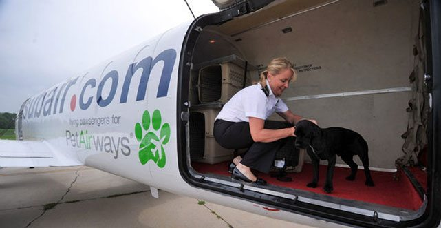 Is Pet Airways A Thing Of The Past?