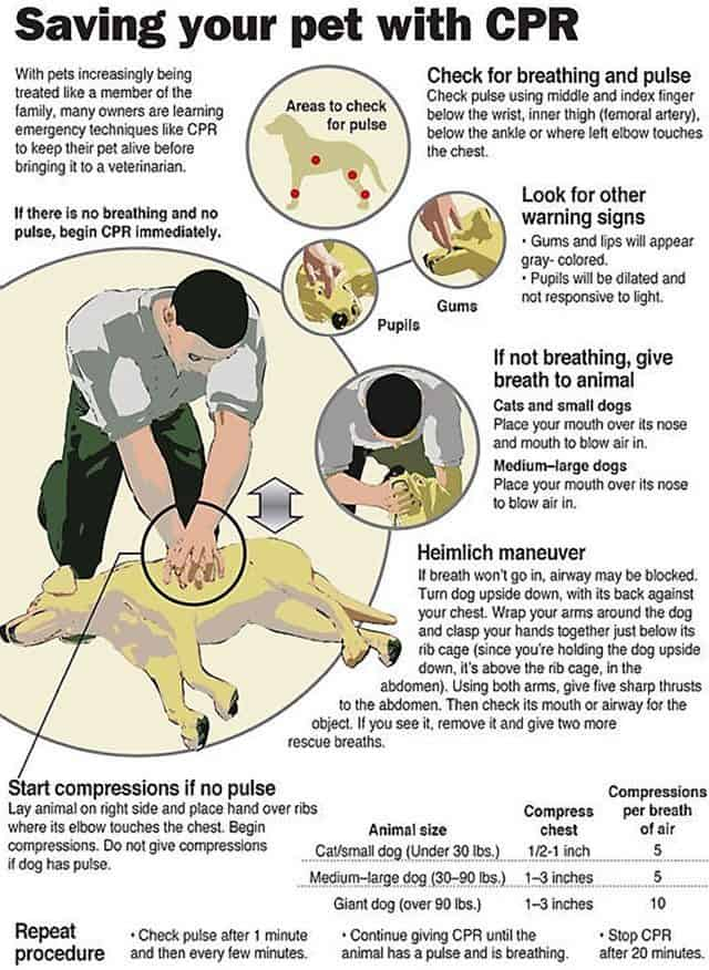 Saving Your Pet With CPR: InfoGraphic