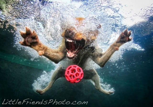 Seth Casteel Underwater Dog 001