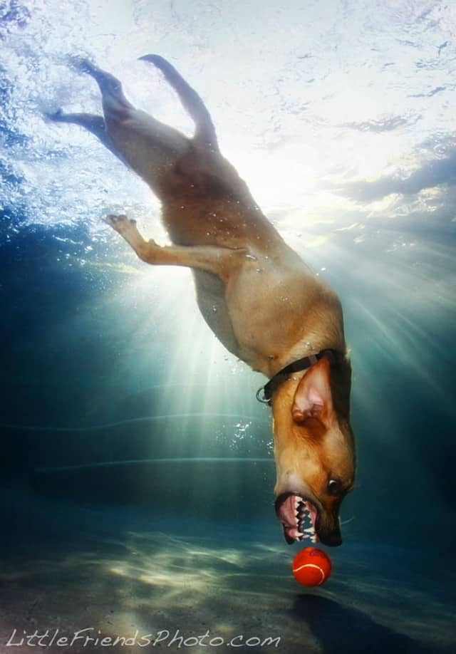 Seth Casteel Underwater Dog 002