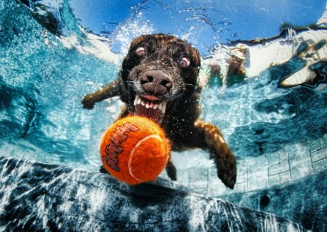 Seth Casteel Underwater Dog 003
