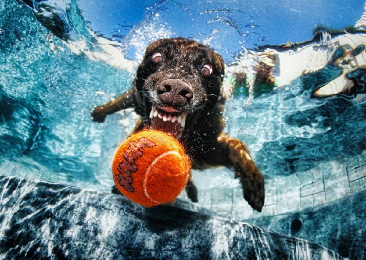Stunning dog photography 49 seth casteel s underwater dogs