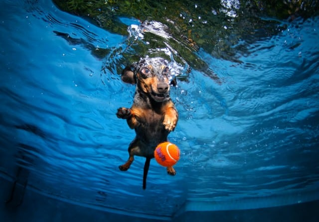 Seth Casteel Underwater Dog 005